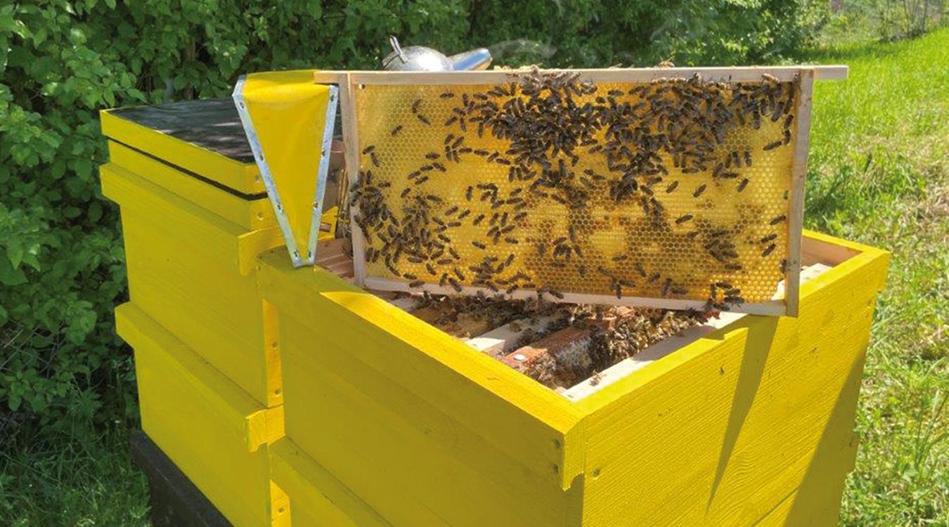 Stadtwerke Mosbach Naturschutz Biene